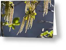 Tassels In The Breeze Greeting Card