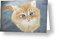 Tater Bud Kitty Greeting Card