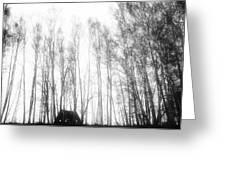 tathata #19NULLUS2 Greeting Card by Alex Zhul