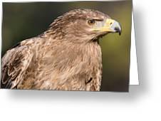 Tawny Eagle Portrait Greeting Card