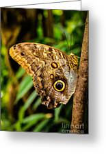 Tawny Owl Butterfly Greeting Card