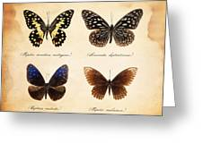 Taxidermy Butterflies Greeting Card