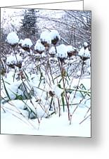 Tea Cups Of Snow Greeting Card