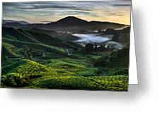 Tea Plantation At Dawn Greeting Card