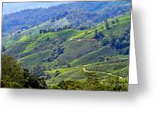 Tea Plantation In The Cameron Highlands Malaysia Greeting Card