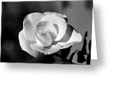 Tea Rose 01 - Infrared Greeting Card