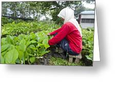 Teak Planting, Malaysia Greeting Card by Science Photo Library