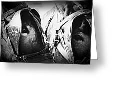 Team Work - Mules 2225-012-bw Greeting Card