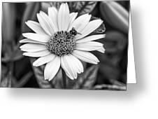 Teamwork Monochrome Greeting Card