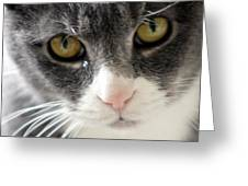 Tears Of A Cat Greeting Card