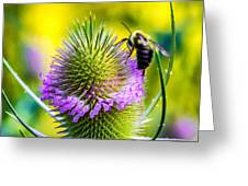 Teasel And Bee Greeting Card