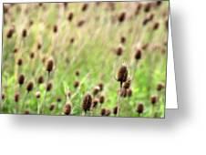 Teasel Meadow Greeting Card