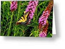 Technicolor Greeting Card