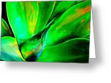 Technicolor Succulent Greeting Card