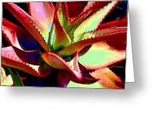 Technicolored Agave Succulent Greeting Card