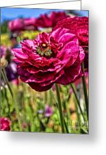 Tecolote Ranunculus Flowers By Diana Sainz Greeting Card