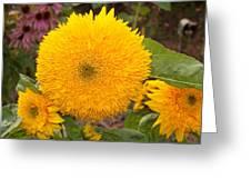 Teddy Bear Sunflower 2 Greeting Card