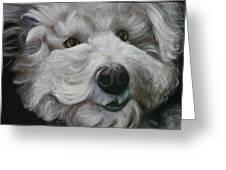 Teddy The Bichon Greeting Card