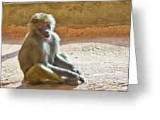 Teen Baboon Greeting Card