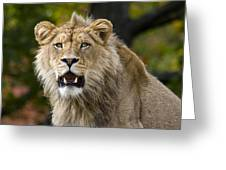Teenage King Of The Beast Greeting Card