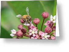 Teetering On Milkweed Greeting Card