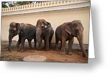 Temple Elephants Maharaja's Palace India Mysore Greeting Card