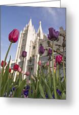 Temple Tulips Greeting Card by Chad Dutson