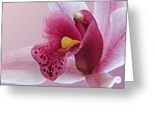 Temptation - Pink Cymbidium Orchid Greeting Card