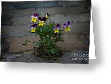 Tenacity Comes In Small Packages Greeting Card by The Stone Age