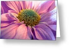 Tender Daisy Greeting Card