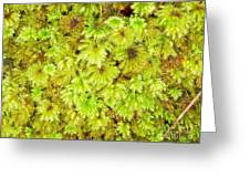 Tender Fresh Green Moss Background Texture Pattern Greeting Card