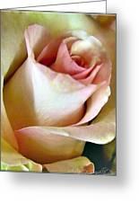 Tender Rose Bud Greeting Card
