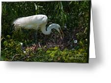 Tending The Nest Greeting Card