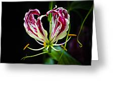 Tendrils Of My Mind Greeting Card
