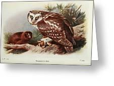 Tengmalms Owl Greeting Card