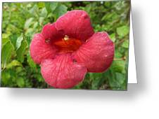 Tennessee Red Wild Flower Greeting Card
