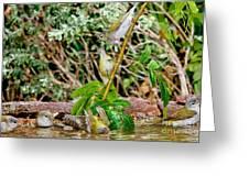 Tennessee Warblers Greeting Card