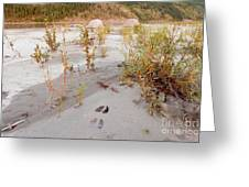 Tents At Yukon River In Remote Taiga Wilderness Greeting Card