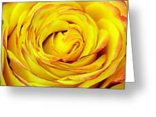 Tequila Sunrise Rose Greeting Card