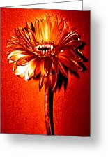 Tequila Sunrise Zinnia Greeting Card