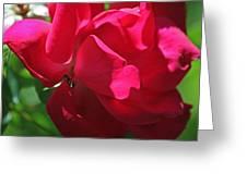 Teresas Fuchsia Rose IIi Greeting Card