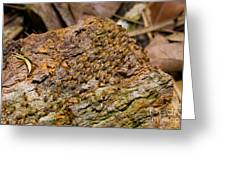 Termites On Log Greeting Card by William H. Mullins
