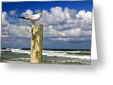Tern On A Piling Greeting Card