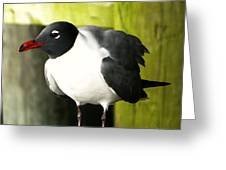 Tern Greeting Card