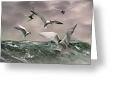 Terns Feasting At Sea Greeting Card