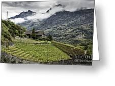 Terraced Vineyard Greeting Card