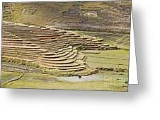 Terraces And Paddy Fields Greeting Card