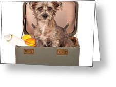 Terrier Dog In Suitcase Greeting Card