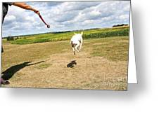 Terrier Levitation Greeting Card