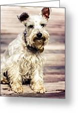 Terrier On Deck Greeting Card